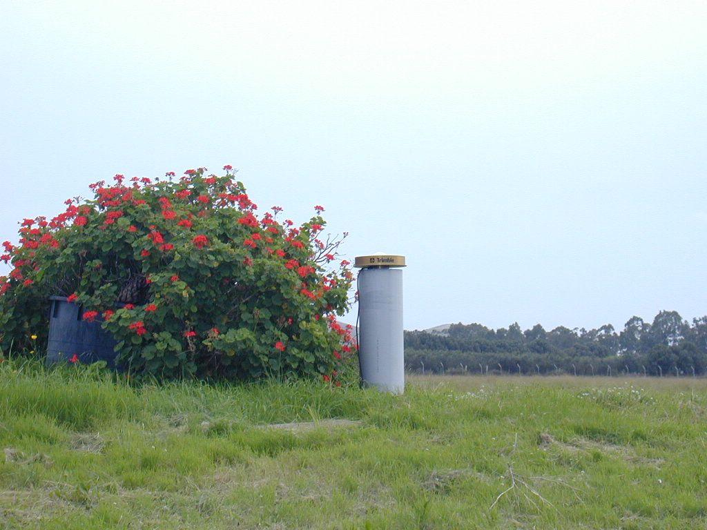 Antenna pillar